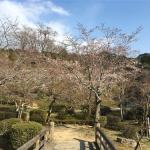 【緊急告知】孔子の里 桜まつり 期間延長のお知らせ!!