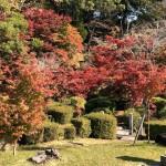 紅葉まつり期間中の西渓公園紅葉状況をフェイスブックでお伝えします!