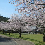 孔子の里桜まつり中止のお知らせ