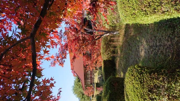 西渓公園紅葉①