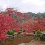 紅葉の見頃を迎えた西渓公園(お知らせ)